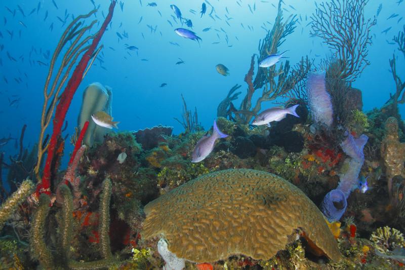 roatan-diving